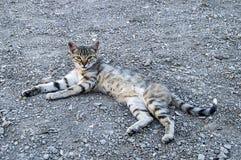 Большие изображения кота глаз, большие рассеянные коты, глаза кота самое красивое слушаемые коты, самые красивые глаза кота, изоб Стоковые Изображения RF