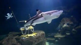 Большие имитации аквариума под водой и заплывание акулы в стороне акции видеоматериалы