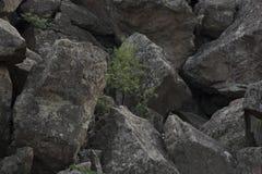 Большие камни с деревом Стоковая Фотография