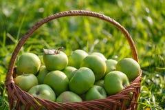 Большие корзины яблок на зеленой предпосылке сада Стоковые Изображения RF