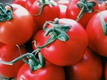 большие красные томаты Стоковые Фото