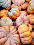 Большие красочные оранжевые тыквы стоковые изображения