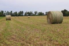 Большие крены сена Стоковое Изображение