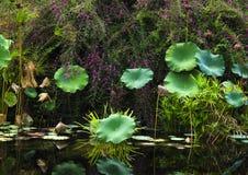 большие листья засаживают одиночную Стоковая Фотография RF