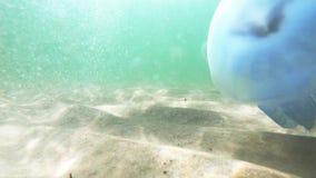 Большие медузы плавая под водой в Чёрное море сток-видео