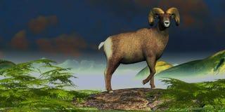 Большие овцы Горна Стоковые Изображения