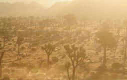 Большие овцы рожка пася в раннем утре освещают Стоковая Фотография RF
