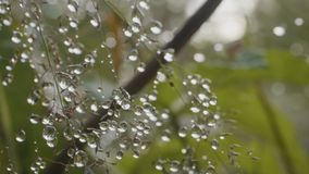 Большие падения росы на траве Большие падения воды на траве Стоковые Фотографии RF