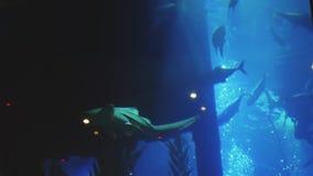 Большие рыбы плавают в большой аквариум сток-видео