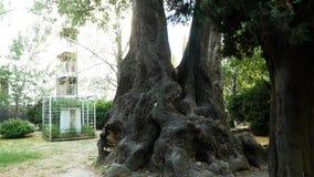 Большие старые деревья на улице в южном городе 4K сток-видео