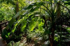 Большие тропические llants Стоковое Изображение