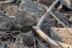 Большие утесы и перемещаться древесина во время захода солнца стоковое фото rf