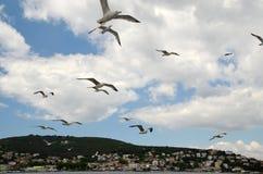 Большие чайки летая над морем Marmara, с предпосылкой островов принца около Стамбула, Турция Стоковое фото RF