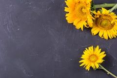 Большие яркие желтые солнцецветы стоковые фото