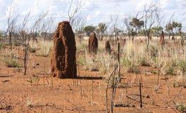Большие anthills термита Австралия, захолустье, северные территории стоковые фотографии rf