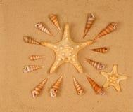 Большие seashells на песке Стоковые Изображения