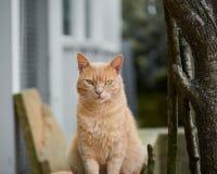 Больший выглядя шикарный кот outdoors на стуле рядом с деревом стоковое фото rf