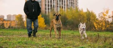 2 больших собаки и предприниматель на городской лужайке Стоковые Фото