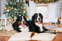2 больших собаки лежат дома камином Стоковая Фотография