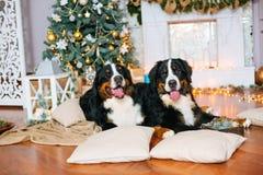 2 больших собаки лежат дома камином Стоковое Изображение