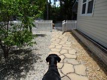 2 больших собаки усмехаясь на камере на солнечный день Стоковые Изображения RF