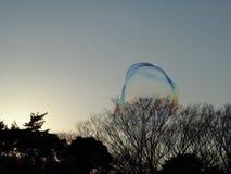 2 больших шатких пузыря в солнечном свете над парком, отражающ радугу цветов и как раз около разрывать Стоковое Изображение RF