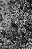 01 08 2011 большого группы поля сделала нидерландскими заводами изображения малое zelhem Стоковое фото RF