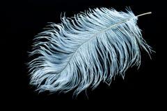 Большое белое перо на черной предпосылке стоковые фото