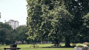 Большое дерево в середине парка сток-видео