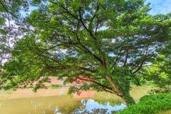 Большое дерево рекой с облаками и небом Стоковая Фотография RF