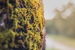 Большое дерево с зеленым mos Стоковые Фотографии RF