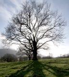 Большое дерево Стоковое фото RF