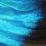 Большое изображение крыла голубой бабочки morpho, высокое увеличение Стоковые Изображения