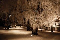 Большое, который замерли дерево на зимний день Стоковые Фото