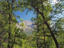Большое лиственное и сосны с взглядом на corsician mounta alpes Стоковое Изображение
