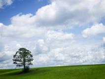 Большое небо и уединённое дерево Стоковые Фото