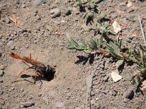 Большое отверстие насекомого летания входя в Стоковое Изображение
