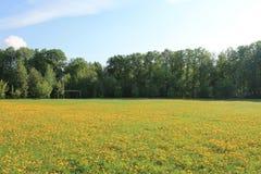 Большое поле желтых одуванчиков в предыдущем утре весны стоковое изображение