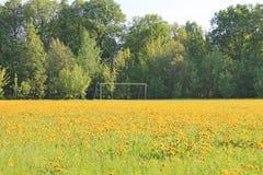 Большое поле желтых одуванчиков в предыдущем утре весны стоковая фотография