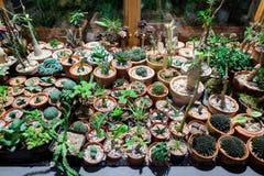 Большое разнообразие кактусов на таблице сверху стоковые фото