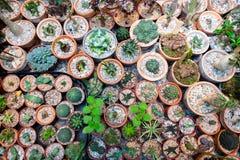 Большое разнообразие кактусов на таблице сверху стоковое изображение