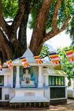 Большое святое дерево Bodhi окруженное buddhas на квадрате Lan Sri стоковые изображения rf