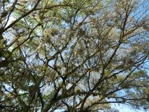 Большое столетнее дерево стоковое изображение