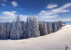 Большое утро зимы в прикарпатских горах с снегом покрыло f Стоковая Фотография RF