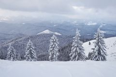 Большое фото зимы в прикарпатских горах с снегом покрыло ели Красочная внешняя сцена, счастливый Новый Год Стоковое фото RF