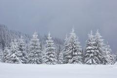 Большое фото зимы в прикарпатских горах с снегом покрыло ели Красочная внешняя сцена, счастливый Новый Год Стоковое Фото