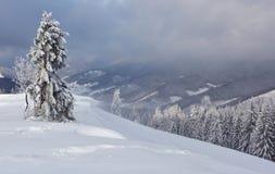Большое фото зимы в прикарпатских горах с снегом покрыло ели Красочная внешняя сцена, счастливый Новый Год Стоковая Фотография