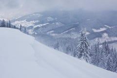 Большое фото зимы в прикарпатских горах с снегом покрыло ели Красочная внешняя сцена, счастливый Новый Год Стоковое Изображение RF