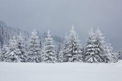Большое фото зимы в прикарпатских горах с снегом покрыло ели Красочная внешняя сцена, счастливый Новый Год Стоковые Фото