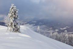 Большое фото зимы в прикарпатских горах с снегом покрыло ели Красочная внешняя сцена, счастливый Новый Год Стоковое Изображение